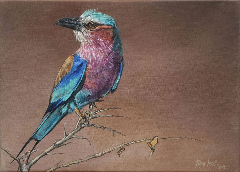Lilac-breasted-Roller-website-size