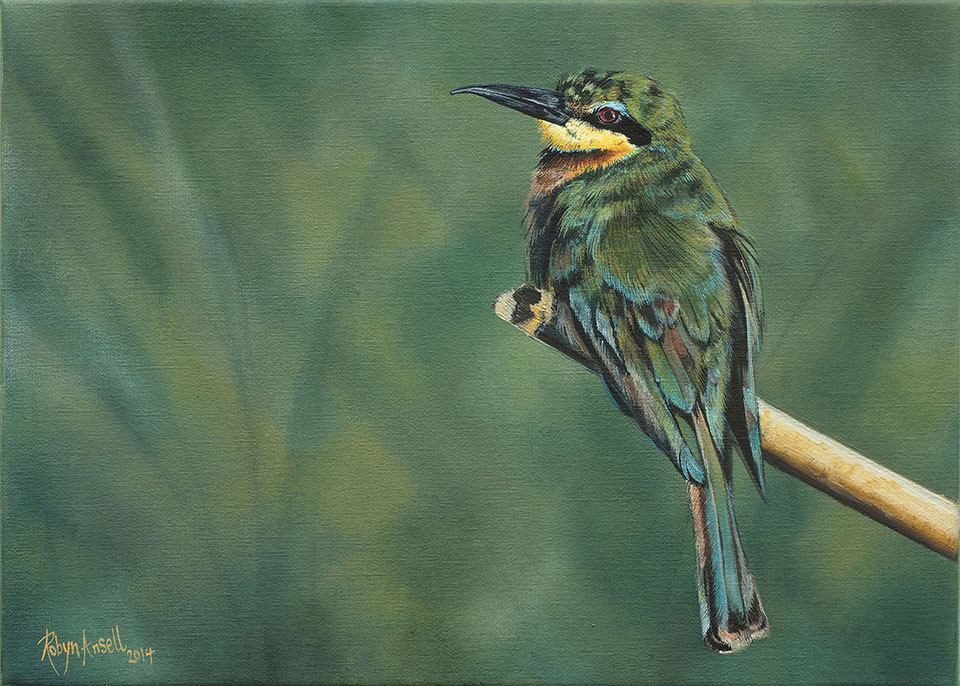 Little-Bee-eater-website-size