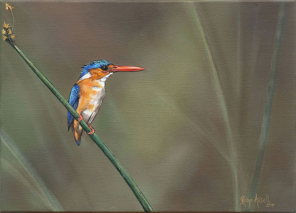Malachite-Kingfisher-website-size