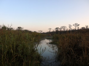 Early morning in Southern Kruger