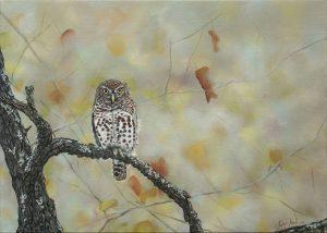 Owl_website size